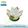 Lotos bílý 13 cm - Velda Lotus white