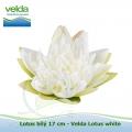 Lotos bílý 17 cm - Velda Lotus white
