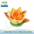 Lotos žlutý 17 cm - Velda Lotus yellow