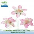 Klematis růžový 10-13 cm, 3 kusy - Velda Clematis pink