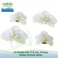 Orchidej bílá 7-9 cm, 4 kusy - Velda Orchid white