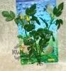 Rostlina tmavými trojčitými listy - 20 cm