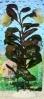 Rostlina s červeno - fialovými vejčitými listy - 25 cm