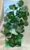 Rostlina s muškátovými tmavými listy s bílými žilkami - 35cm