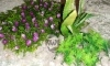 Rostlina s fialovými růžemi - 26x26 cm