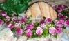 Rostlina s růžovými růžemi - 26x26 cm