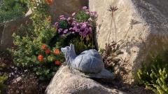 Kamenné zvíře - Šnek