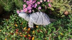 Kamenné zvíře - Želva