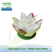 Lotos bílý 13 cm - Velda Lotus white