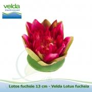 Lotos fuchsie 13 cm - Velda Lotus fuchsia
