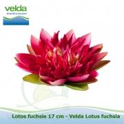 Lotos fuchsie 17 cm - Velda Lotus fuchsia