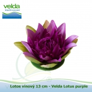 Lotos vínový 13 cm - Velda Lotus purple