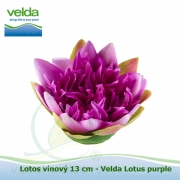 Lotos vínový 17 cm - Velda Lotus purple