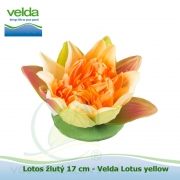 Lotos žlutý 17 cm - Velda Lotus yellow