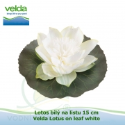 Lotos bílý na listu 15 cm - Velda Lotus on leaf white
