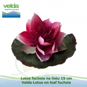 Lotos fuchsia na listu 15 cm - Velda Lotus on leaf fuchsia