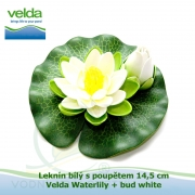Leknín bílý s poupětem 14,5 cm - Velda Waterlily + bud white