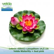 Leknín růžový s poupětem 14,5 cm - Velda Waterlily + bud pink