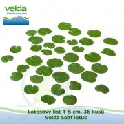 Lotosový list 4-5 cm, 36 kusů - Velda Leaf lotus