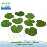 Lotosový list 13 cm, 10 kusů - Velda Leaf lotus