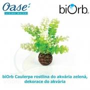 biOrb Caulerpa rostlina do akvária zelená, dekorace do akvária