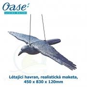 Létající havran, realistická maketa, 450 x 830 x 120mm