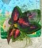 Rostlina se srdčitými zelenými listy s červeným středem - 12 cm
