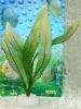 Rostlina se světle dlouhými úzkými listy - 20 cm