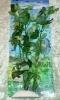 Rostlina s bílo - zelenými listy - 25 cm