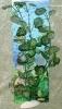 Rostlina s muškátovými světlými listy s bílými žilkami - 35 cm