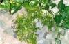 Rostlina se světle zelenými, úzkými listy - 26x26 cm