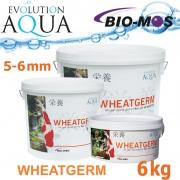 EA Wheatgerm, celoroční krmivo pro střední a velké rybky, velikost 5-6 mm, balení 6 kg