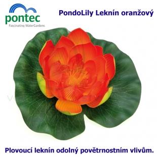 Pontec PondoLily - Leknín oranžový