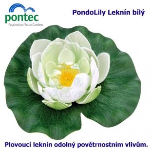 Pontec PondoLily - Leknín bílý