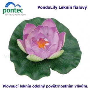 Pontec PondoLily - Leknín fialový