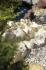 Oase Watercourse element sand left curve