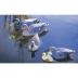 Teal female - Plovoucí kachna